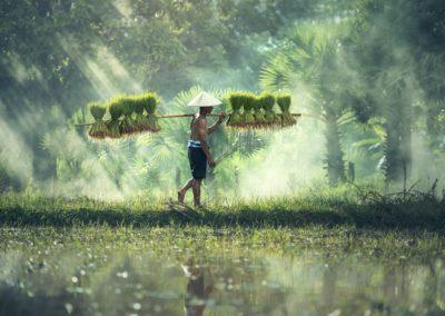 Die Geschichte vom chinesischen Bauern