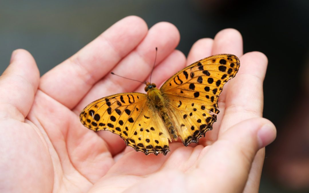 Glück ist ein Schmetterling